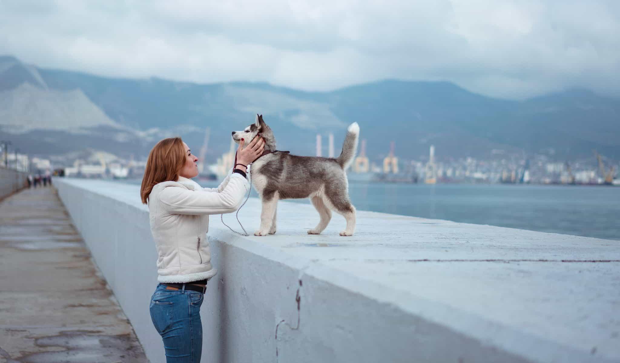Immo Zentralede Tierhaltung In Mietwohnungen Verboten Oder Erlaubt