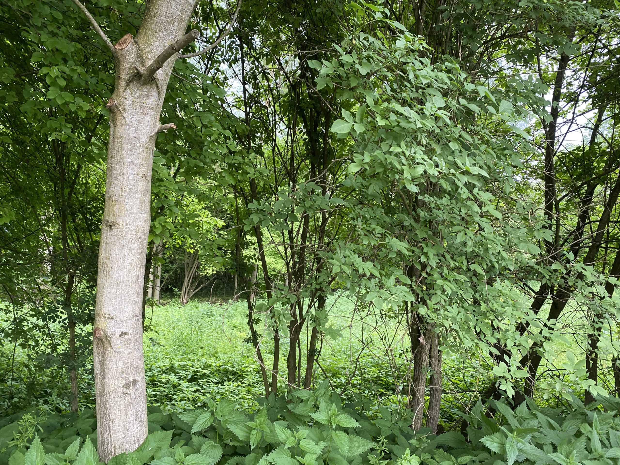 Ehemalige Hofstelle mit kleinem Wohnhaus und großzügigen Gartenland in Hainsfarth